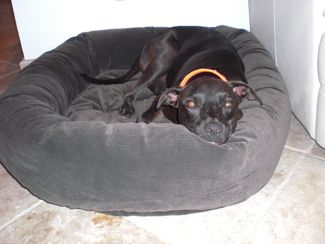Zuni's New Bed
